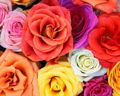 Kolorowy bukiet kwiatów 2